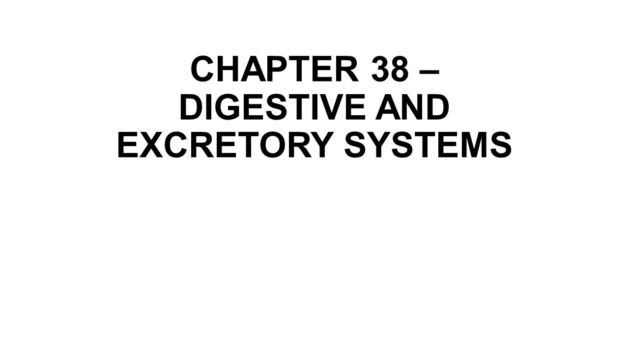 digestive and excretory systems answer key