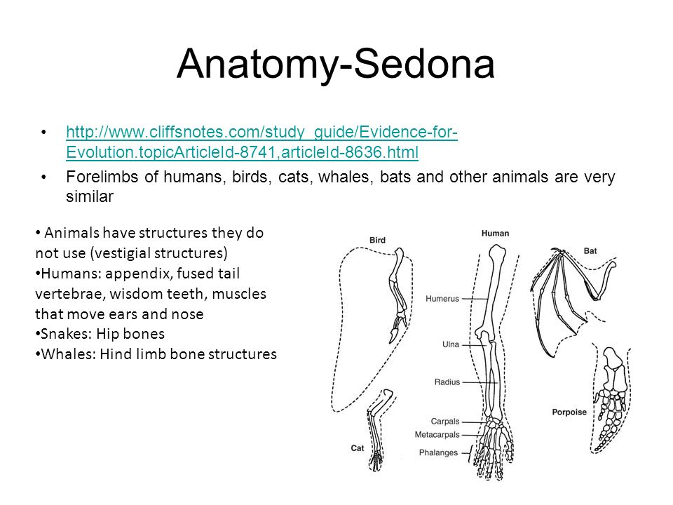 Anatomy-Sedona http://www.cliffsnotes.com/study_guide/Evidence-for-Evolution.topicArticleId-8741,articleId-8636.html.