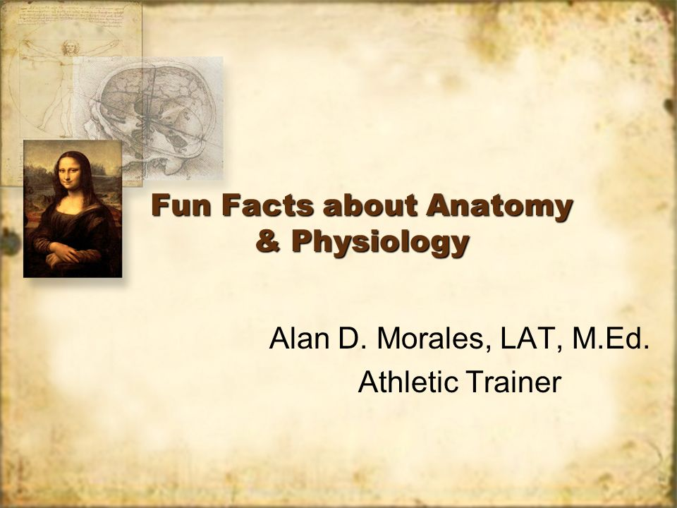 Fun Facts about Anatomy & Physiology - ppt download