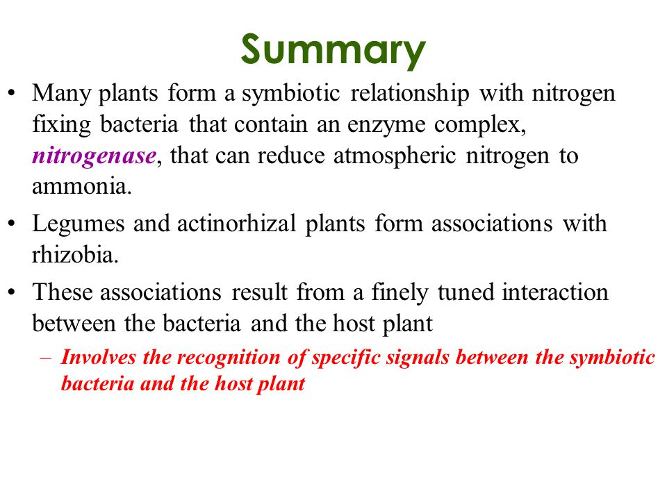 relationship between algae and nitrogen fixation