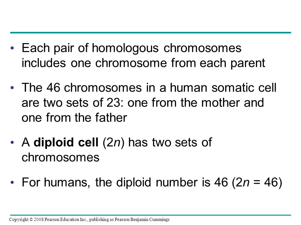 A diploid cell (2n) has two sets of chromosomes