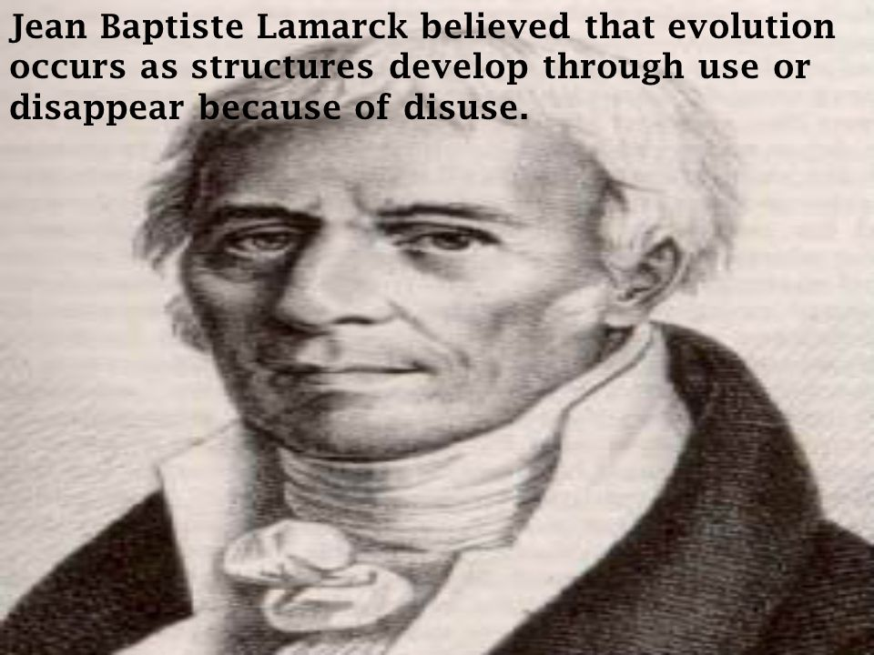 Jean Baptiste Lamarck believed that evolution occurs as structures develop through use or disappear because of disuse.