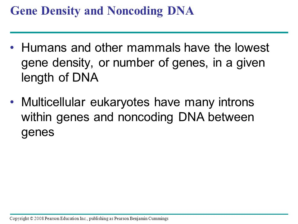 Gene Density and Noncoding DNA