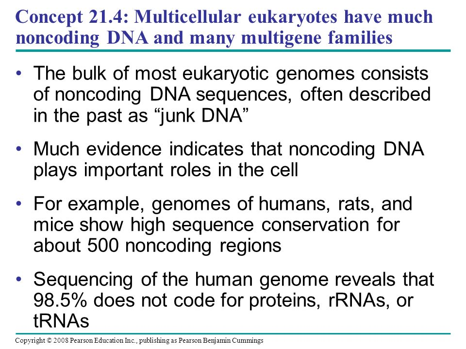 Concept 21.4: Multicellular eukaryotes have much noncoding DNA and many multigene families