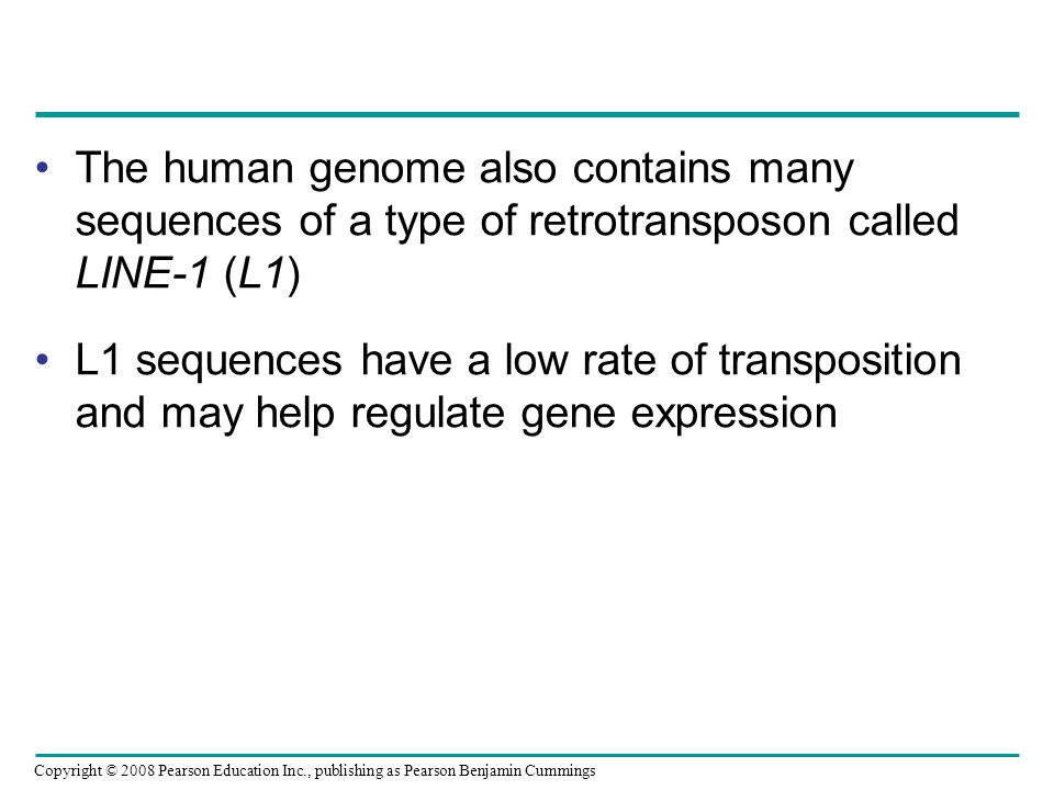 The human genome also contains many sequences of a type of retrotransposon called LINE-1 (L1)