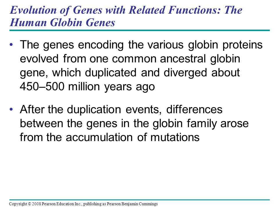 Evolution of Genes with Related Functions: The Human Globin Genes