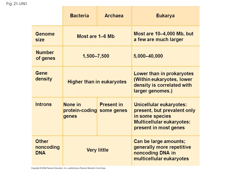 Lower than in prokaryotes (Within eukaryotes, lower