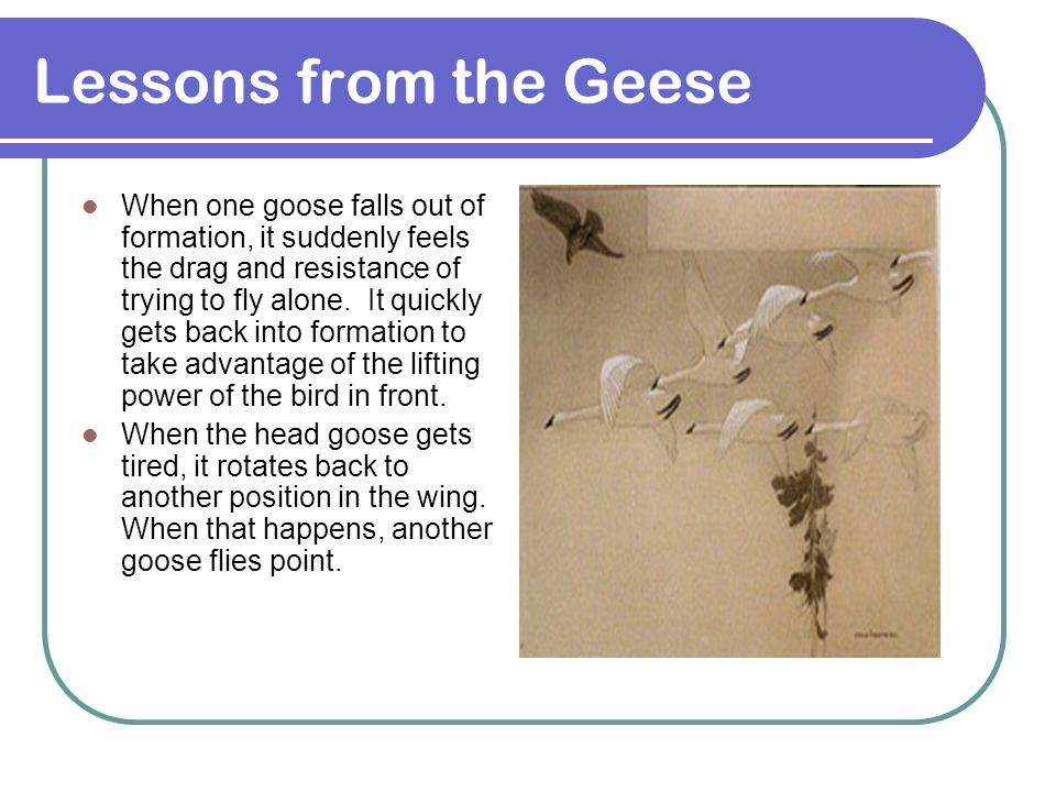 Lessons from the Geese