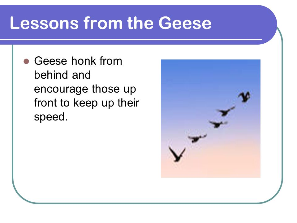 Lessons from the Geese Geese honk from behind and encourage those up front to keep up their speed.