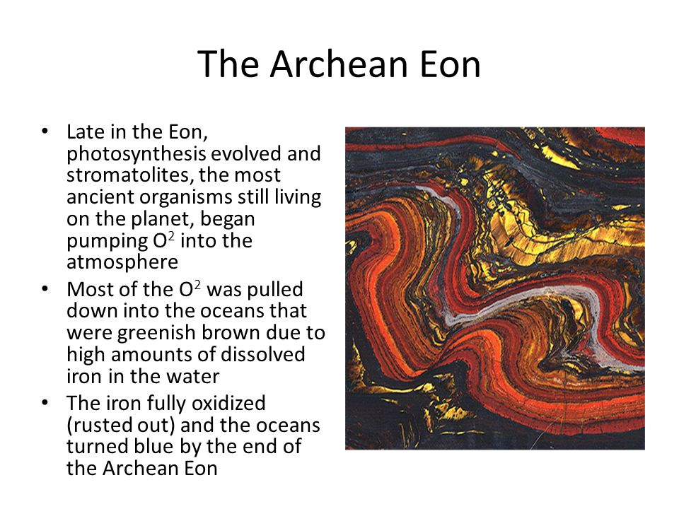what life forms evolved during the archean