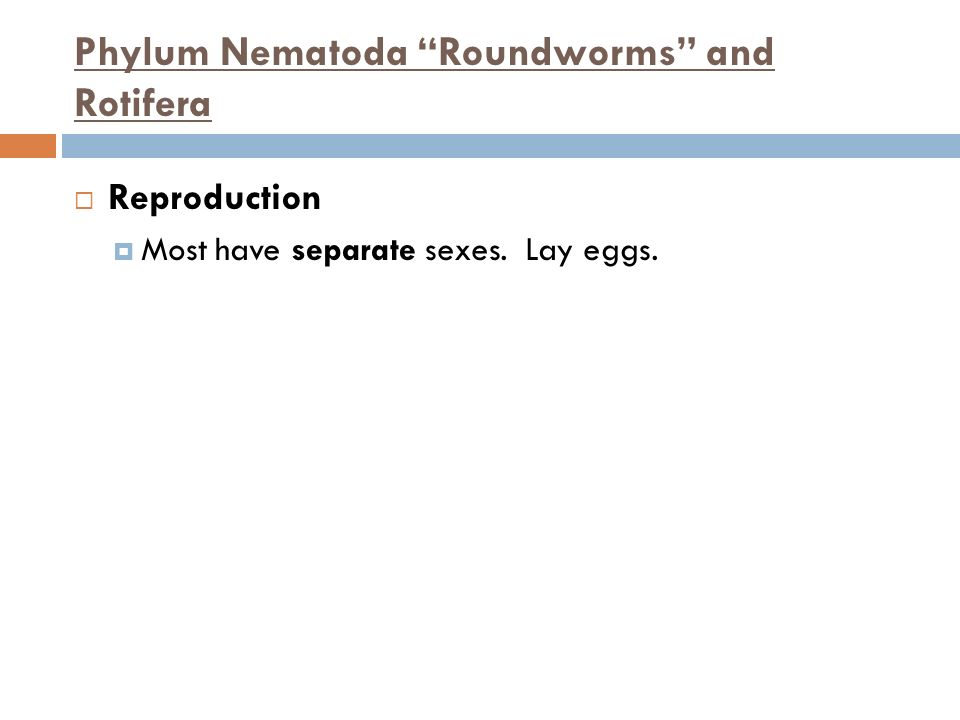 Phylum Nematoda Roundworms and Rotifera