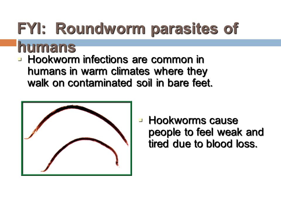 FYI: Roundworm parasites of humans