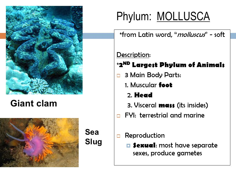 *from Latin word, molluscus - soft