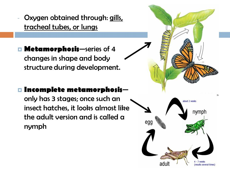 Oxygen obtained through: gills, tracheal tubes, or lungs