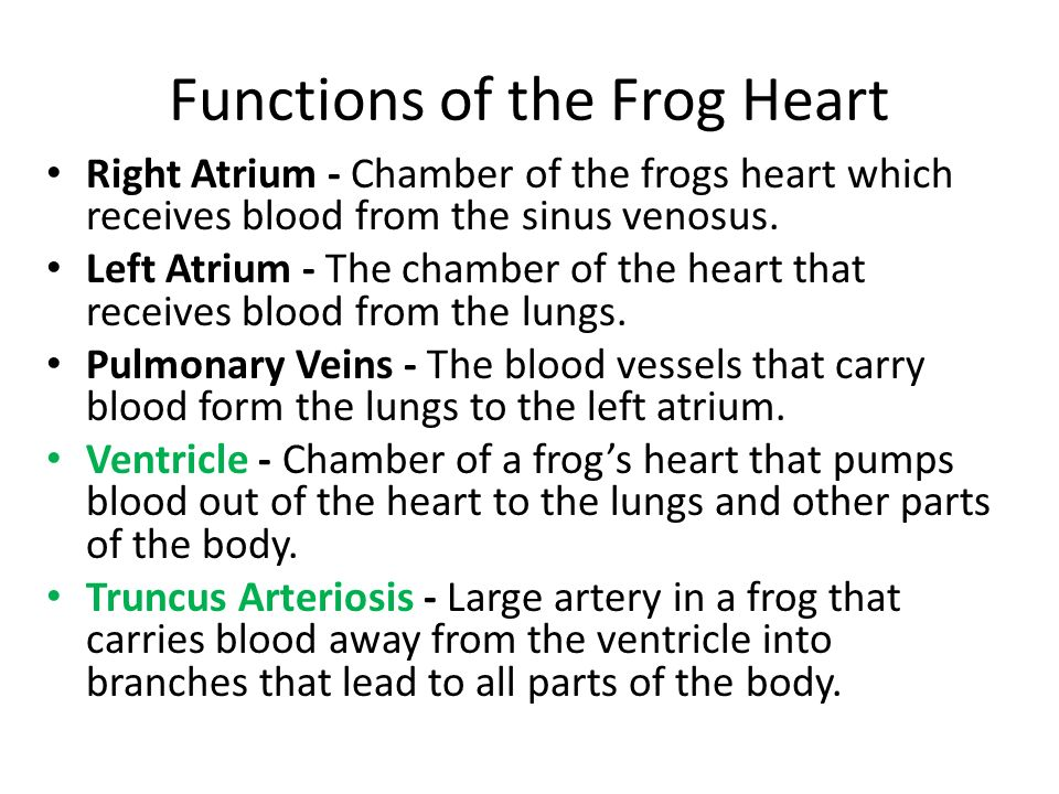 Frog Body Parts And Functions Know The Terms In Green Ppt Video