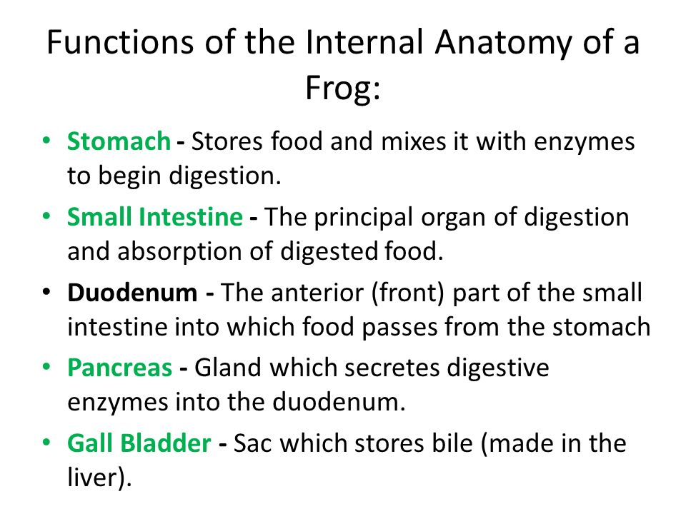 Frog Body Parts and Functions (Know the terms in green) - ppt video ...