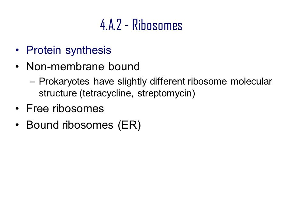 4.A.2 - Ribosomes Protein synthesis Non-membrane bound Free ribosomes