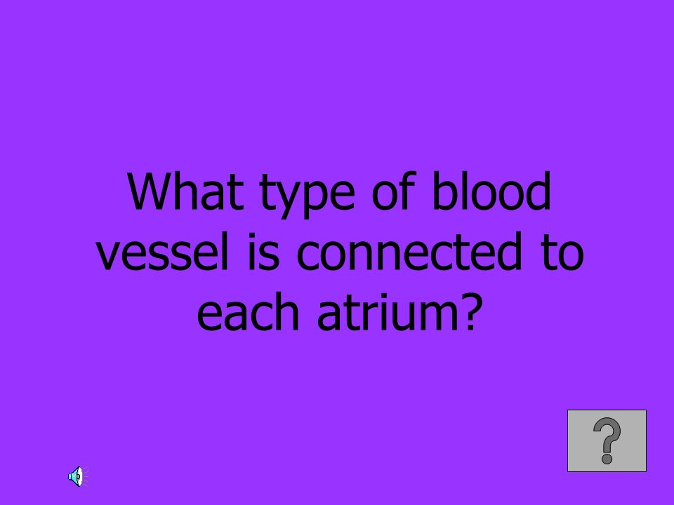 What type of blood vessel is connected to each atrium