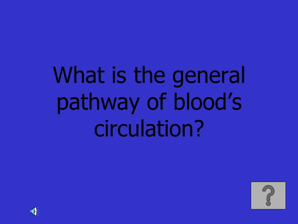 What is the general pathway of blood's circulation