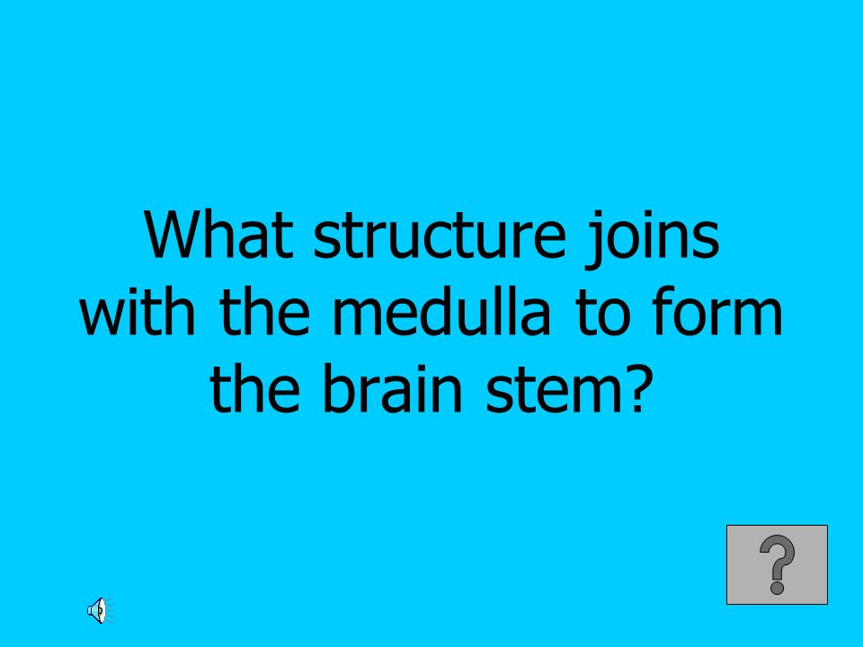 What structure joins with the medulla to form the brain stem