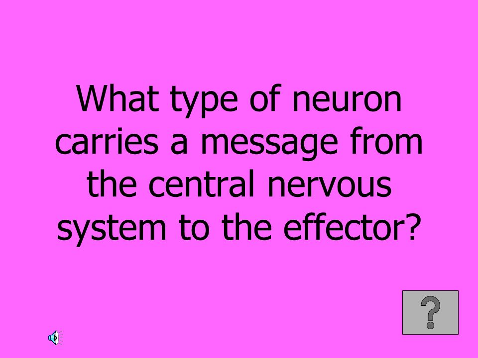 What type of neuron carries a message from the central nervous system to the effector