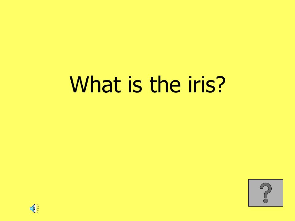 What is the iris