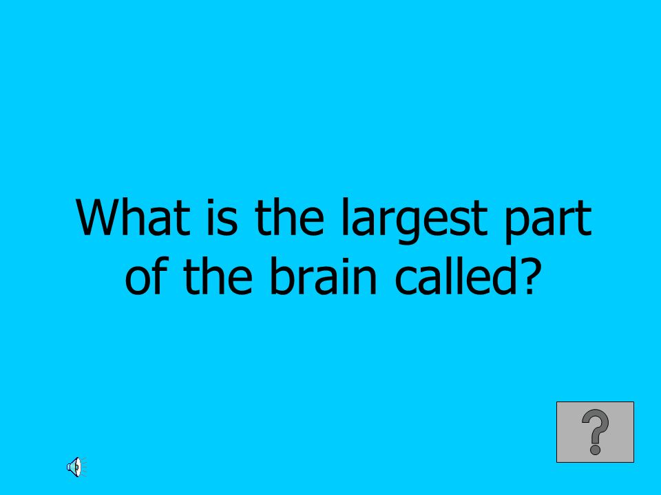 What is the largest part of the brain called
