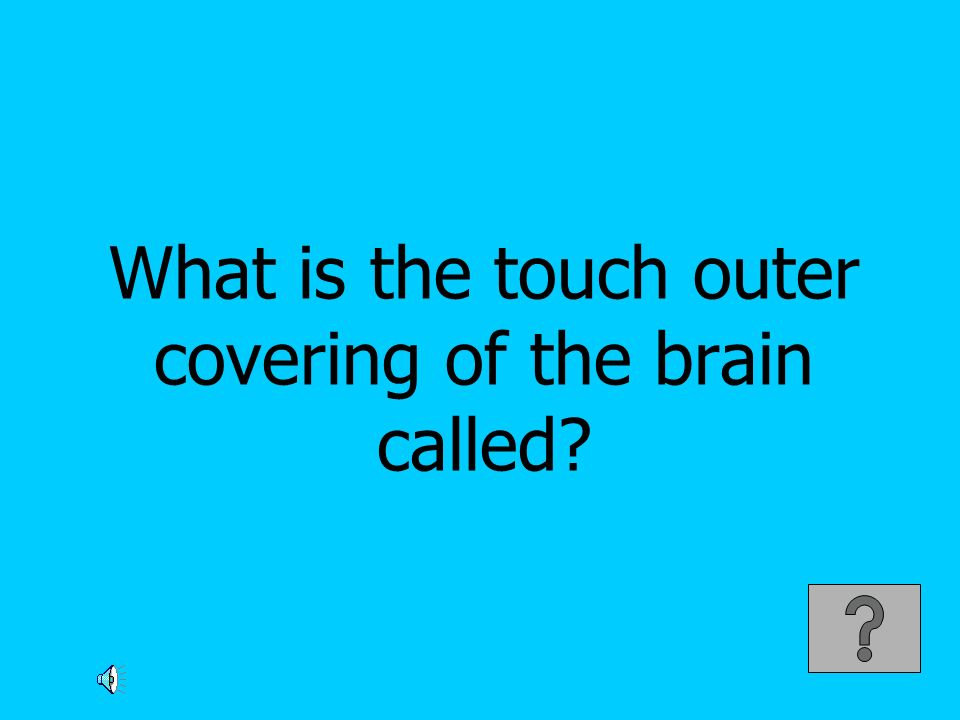 What is the touch outer covering of the brain called