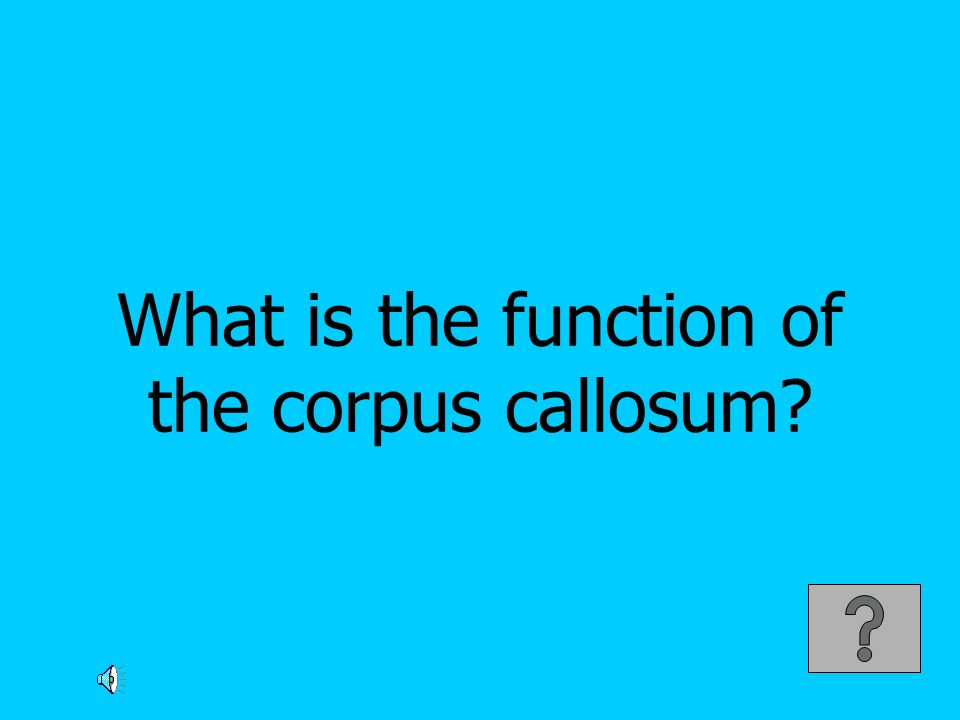 What is the function of the corpus callosum