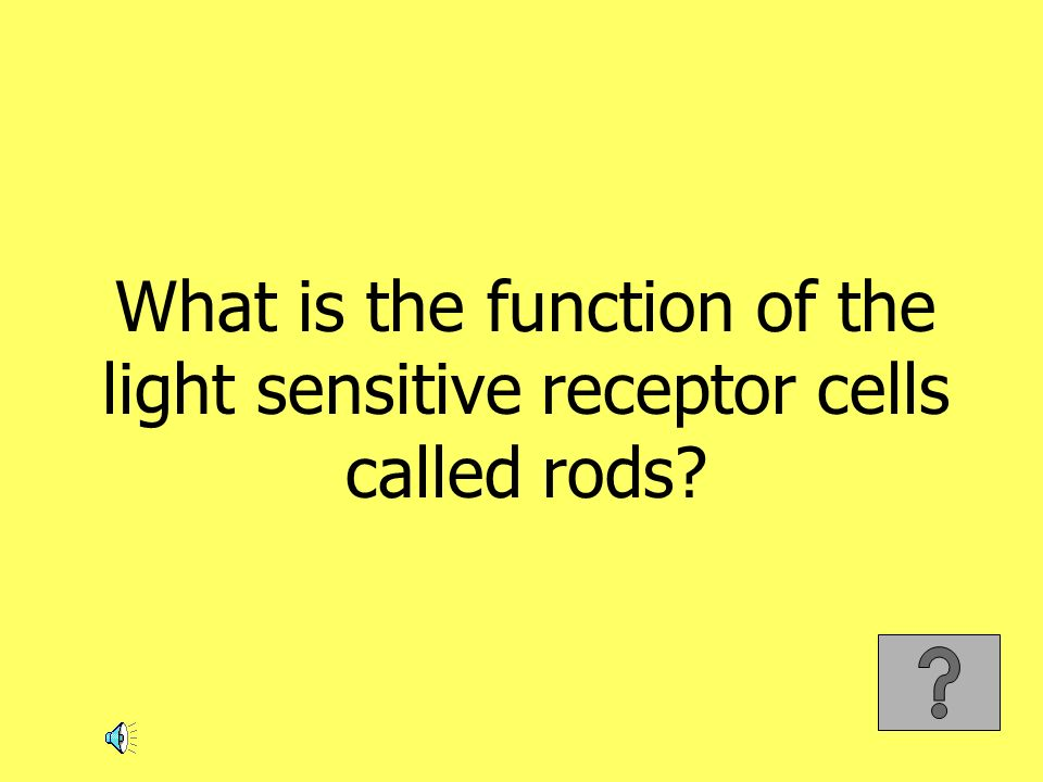 What is the function of the light sensitive receptor cells called rods