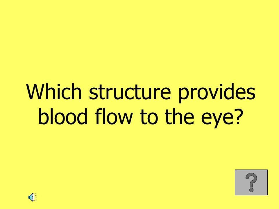 Which structure provides blood flow to the eye