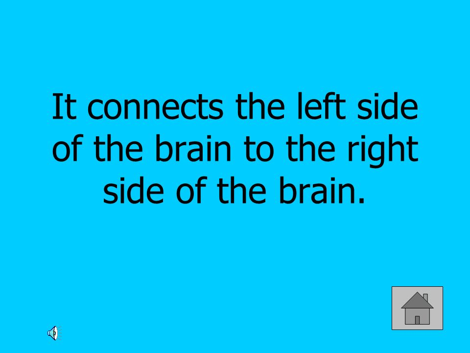 It connects the left side of the brain to the right side of the brain.