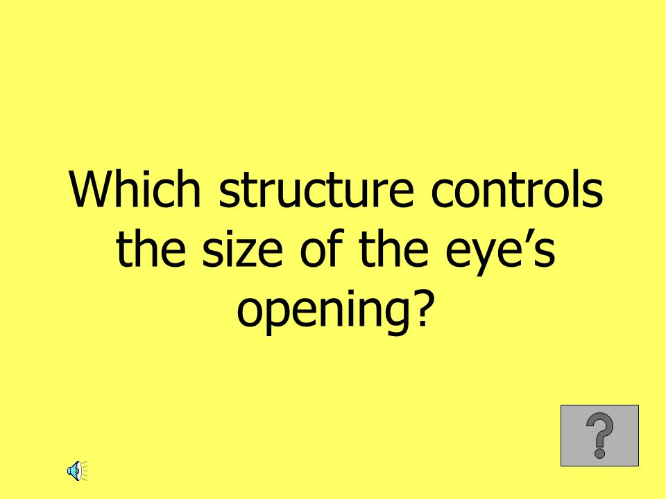 Which structure controls the size of the eye's opening