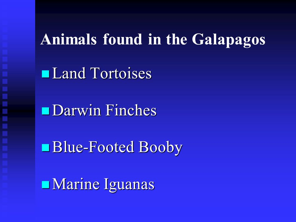 Animals found in the Galapagos