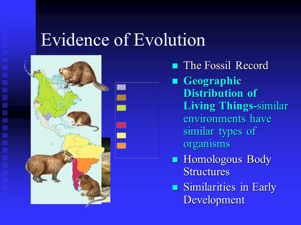 Evidence of Evolution The Fossil Record
