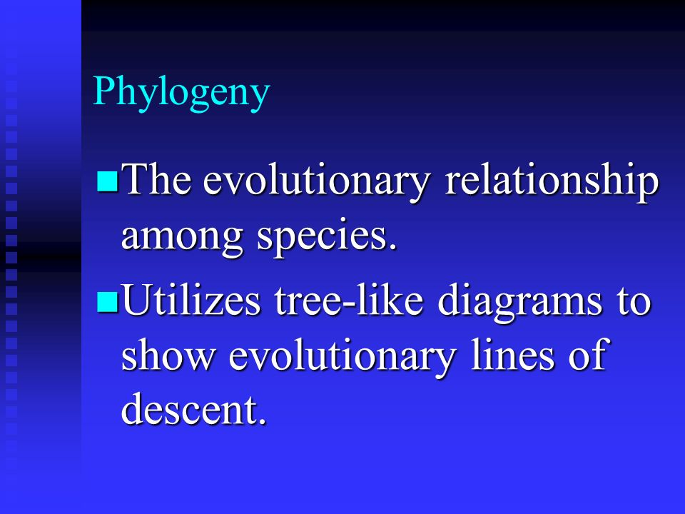 The evolutionary relationship among species.