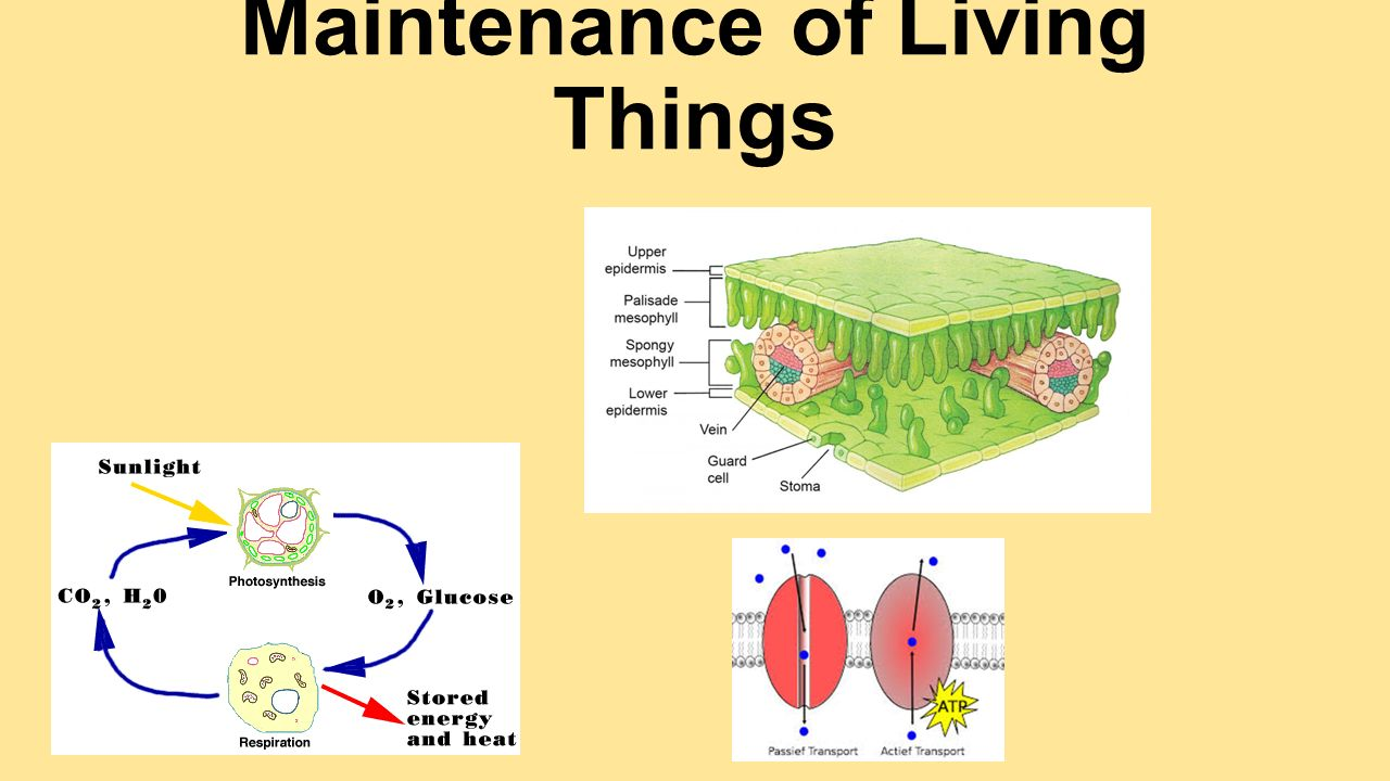 Maintenance of Living Things