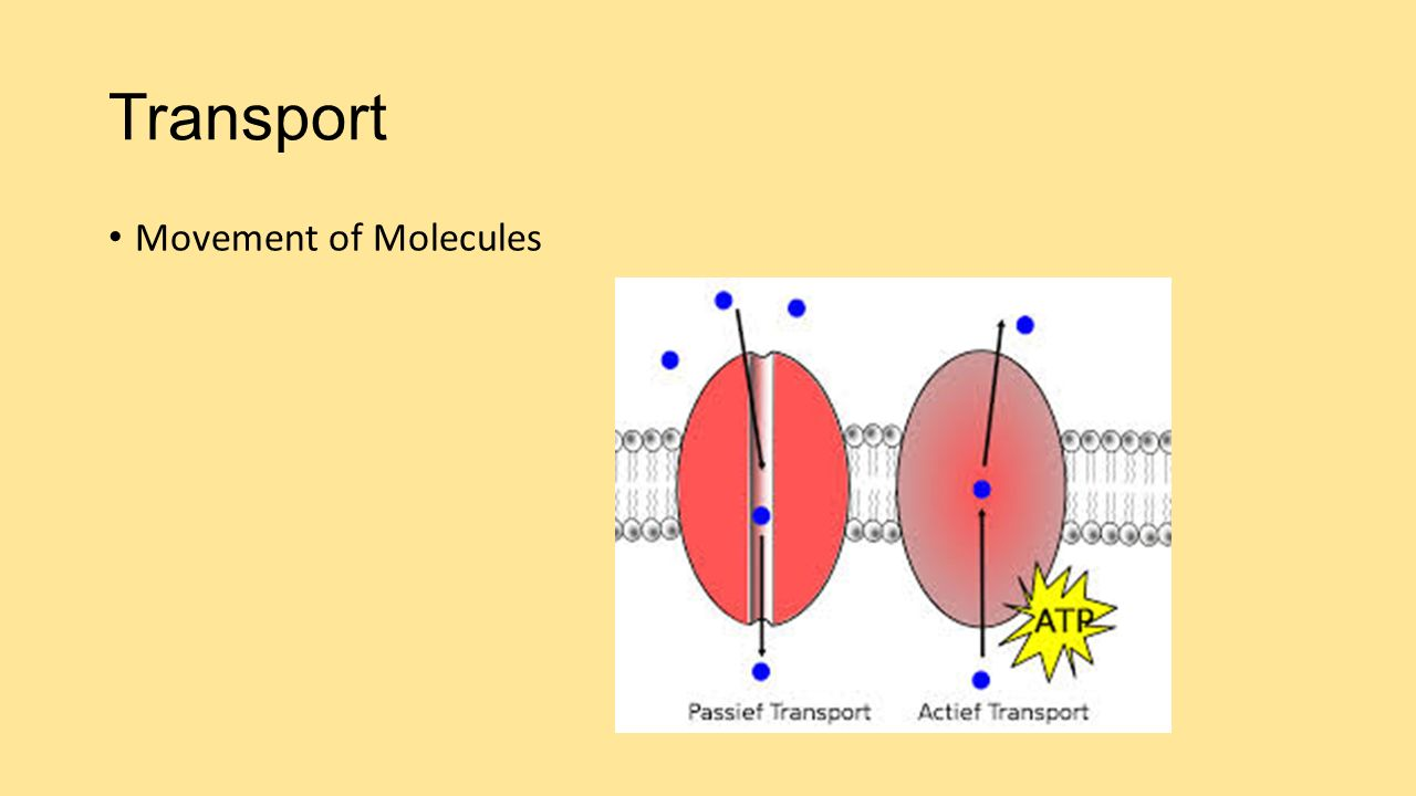 Transport Movement of Molecules