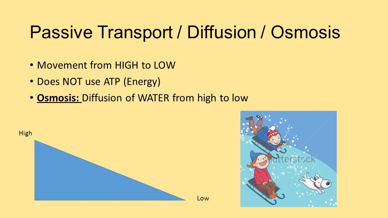 Passive Transport / Diffusion / Osmosis