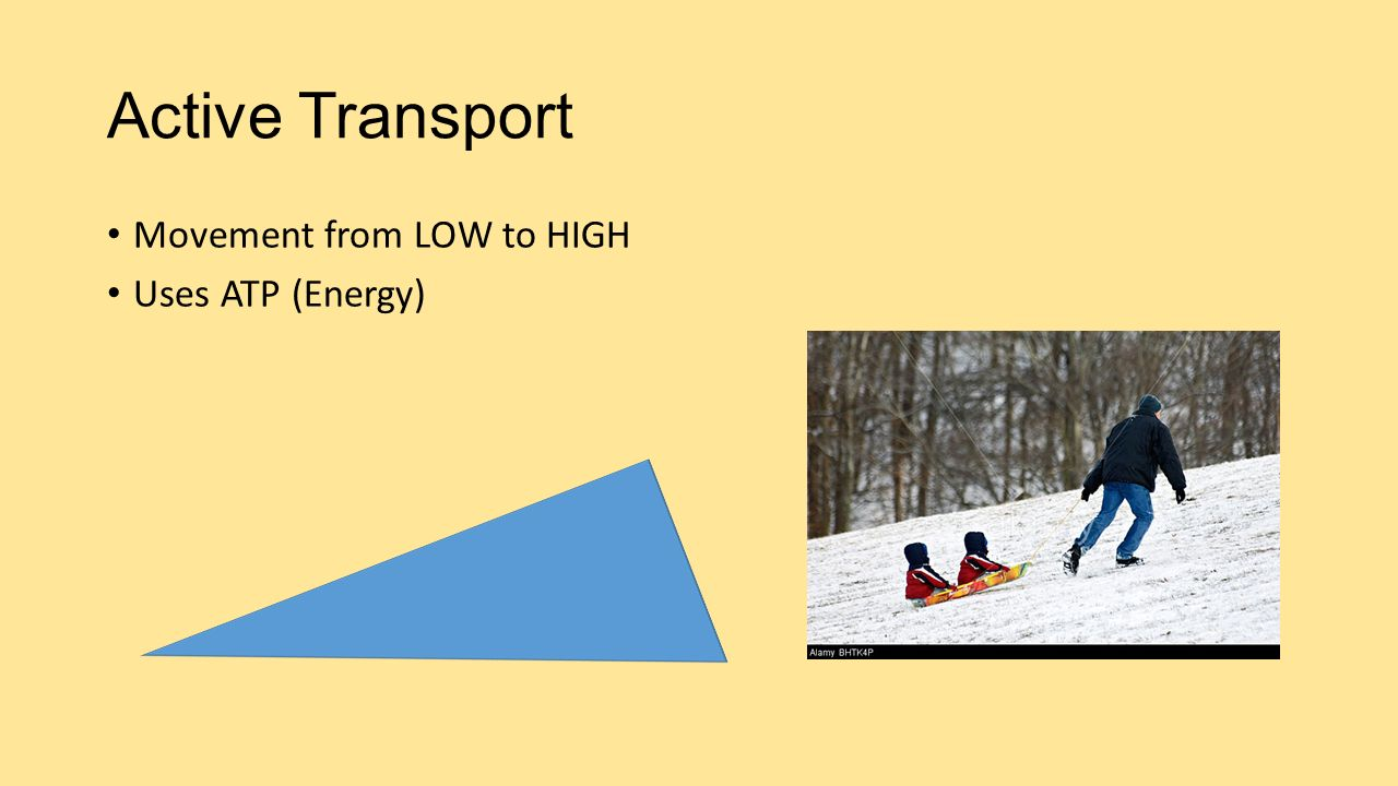 Active Transport Movement from LOW to HIGH Uses ATP (Energy)