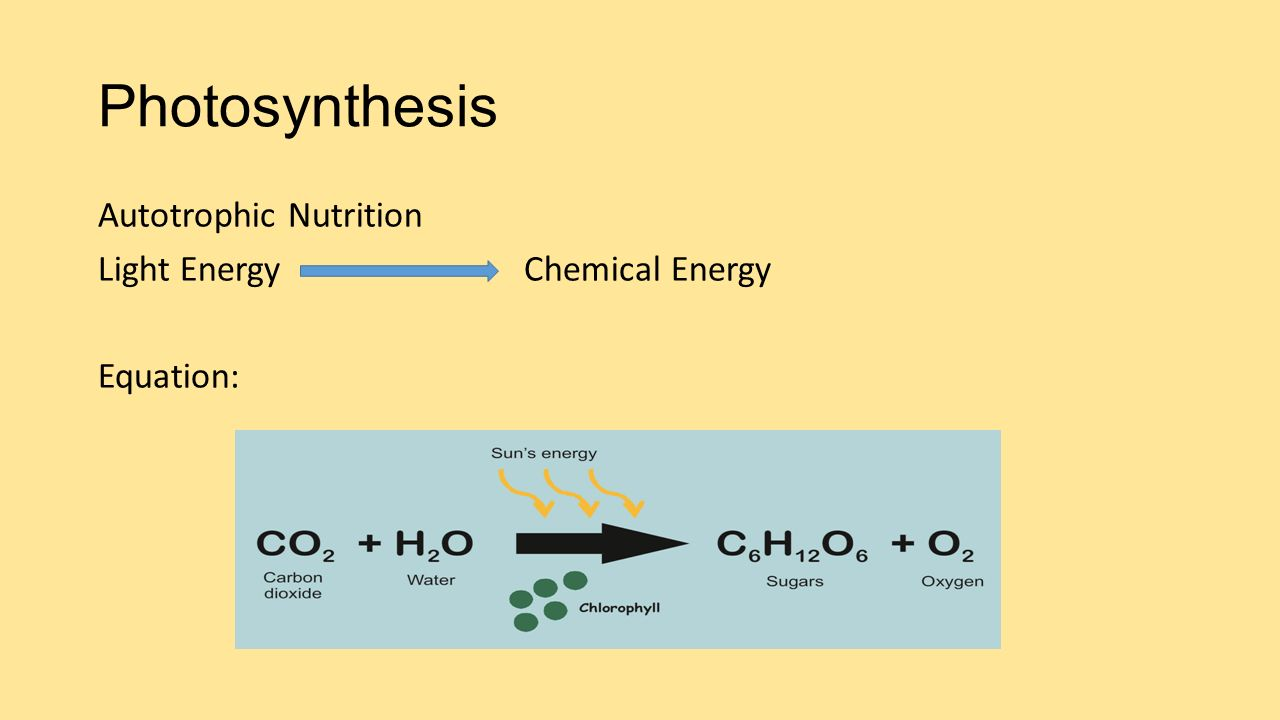 Photosynthesis Autotrophic Nutrition Light Energy Chemical Energy Equation: