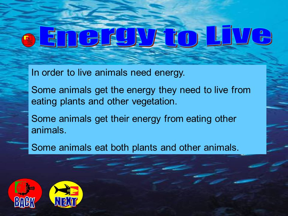 Energy to Live BACK NEXT In order to live animals need energy.