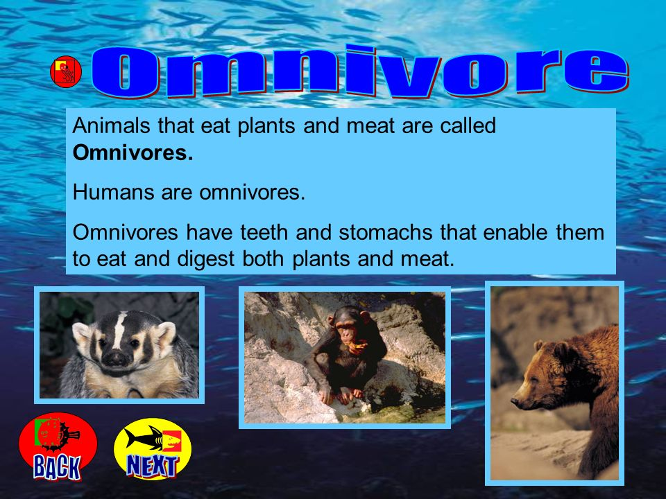 Omnivore Animals that eat plants and meat are called Omnivores. Humans are omnivores.