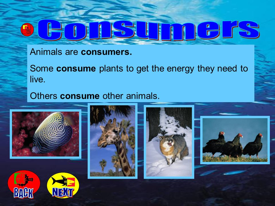Consumers BACK NEXT Animals are consumers.