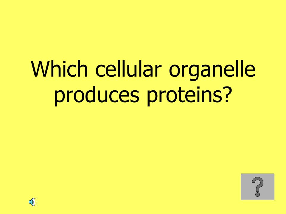 Which cellular organelle produces proteins