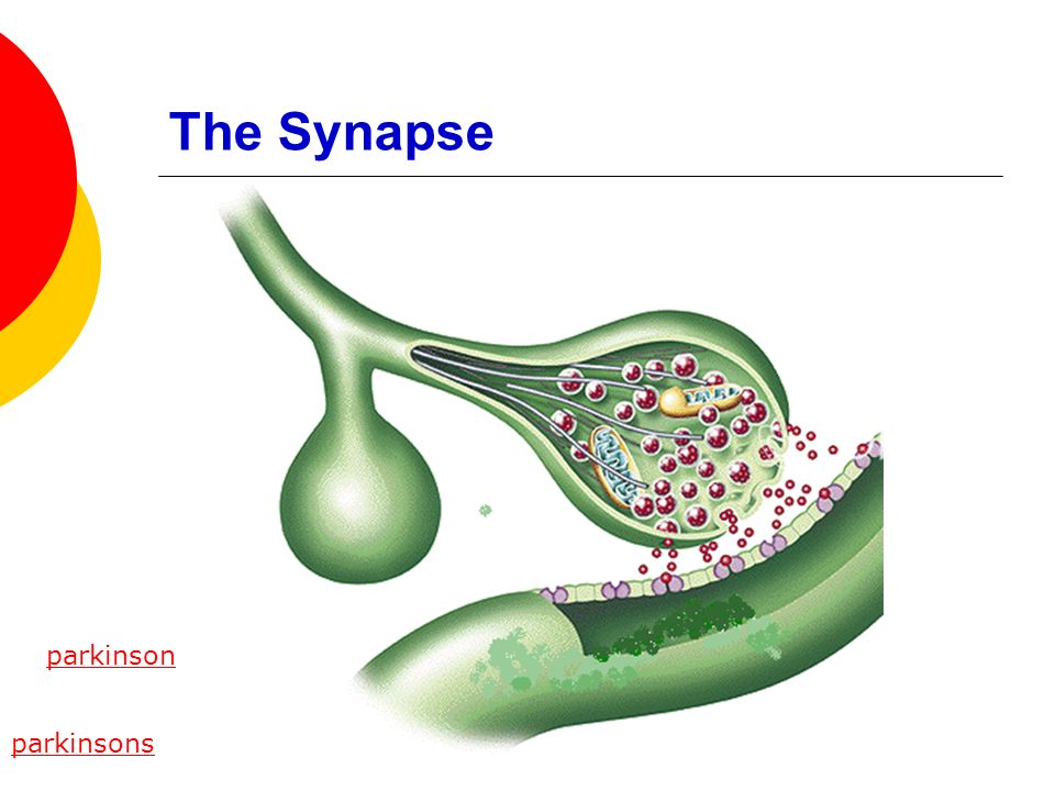 The Synapse parkinson parkinsons