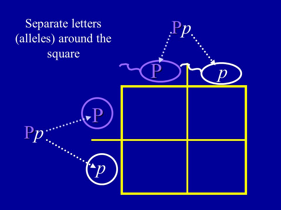 Separate letters (alleles) around the square