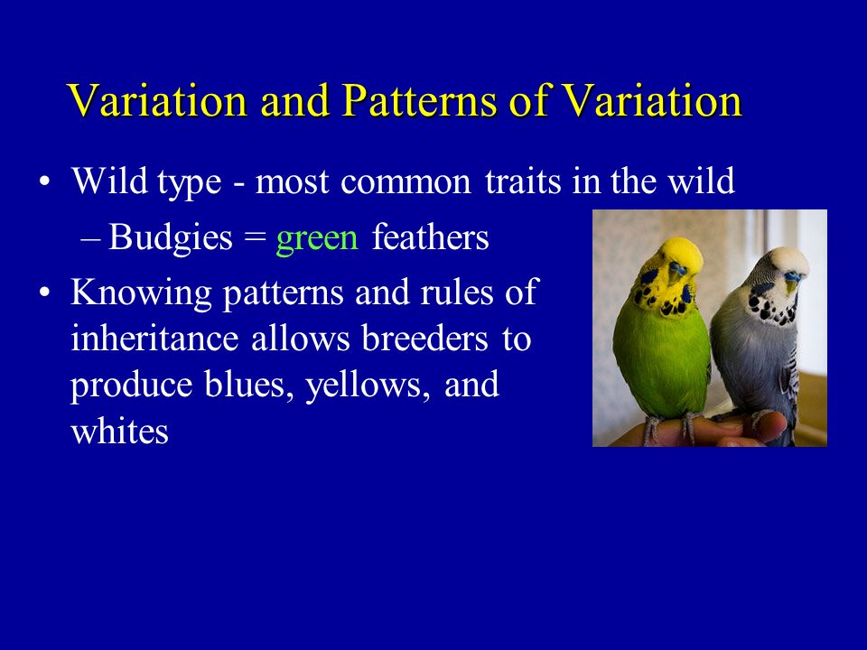 Variation and Patterns of Variation