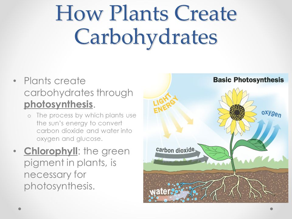 How Plants Create Carbohydrates