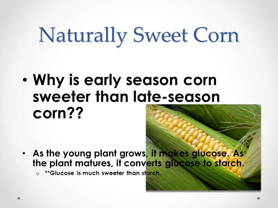 Naturally Sweet Corn Why is early season corn sweeter than late-season corn